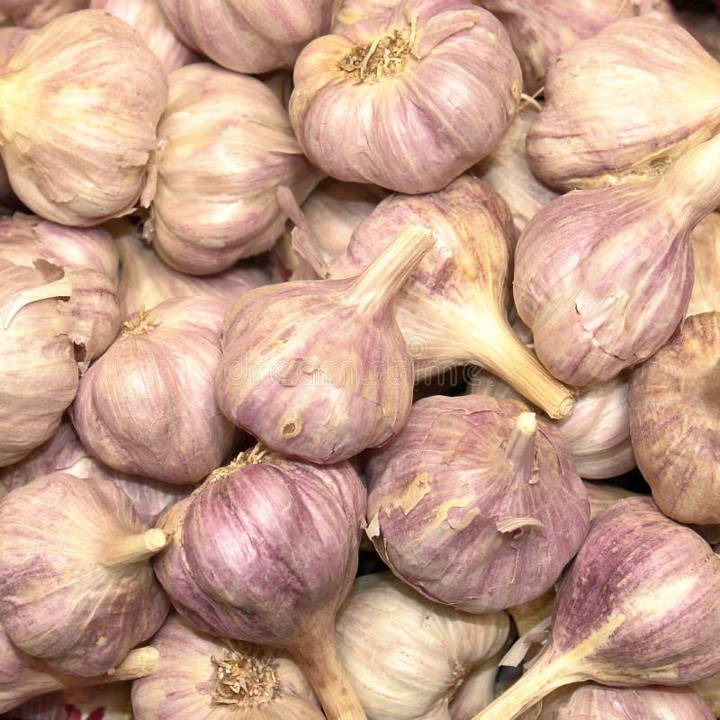 Lampadine dell'aglio fotografia stock