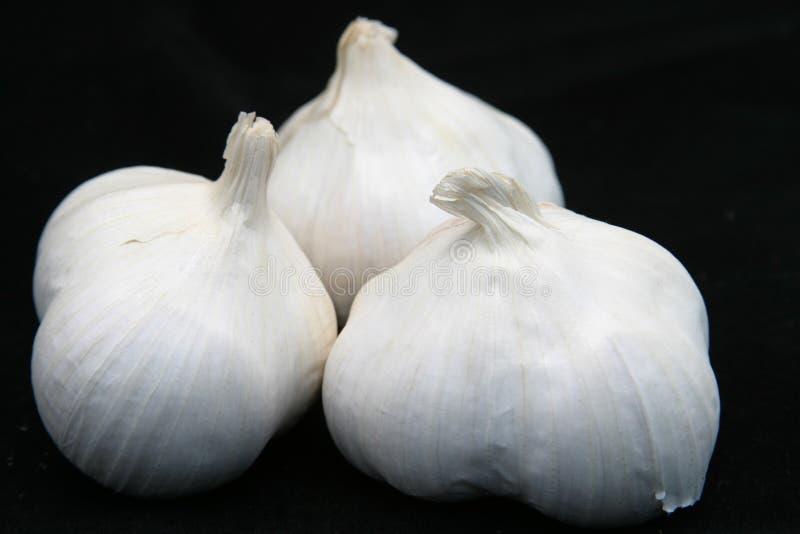 Lampadine dell'aglio sul nero immagini stock libere da diritti
