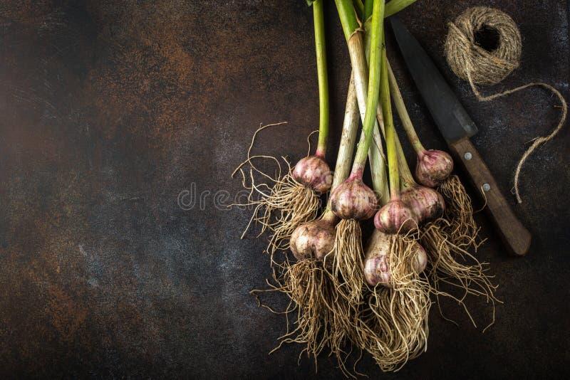 Lampadine organiche fresche dell'aglio immagine stock