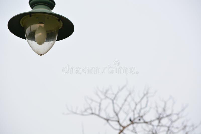 Lampan i trädgården royaltyfri foto