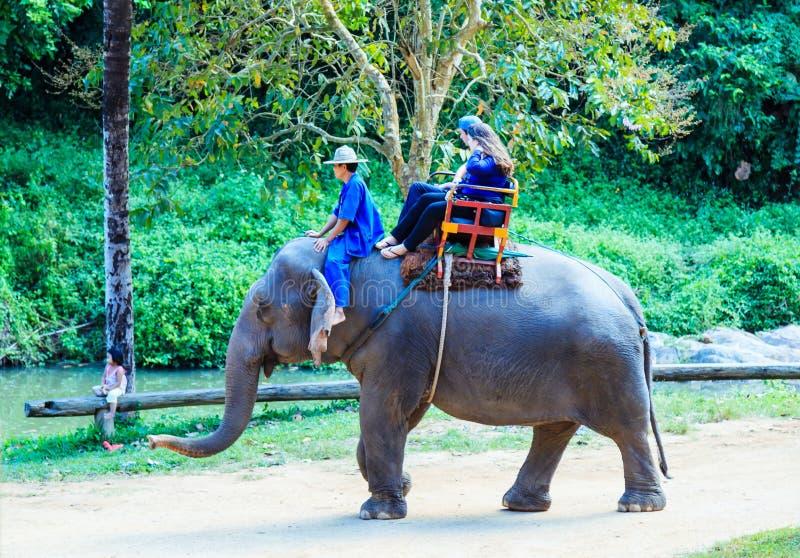 Lampang, Tailândia - 26 de novembro de 2017: Passeio o do Mahout e do turista fotos de stock royalty free