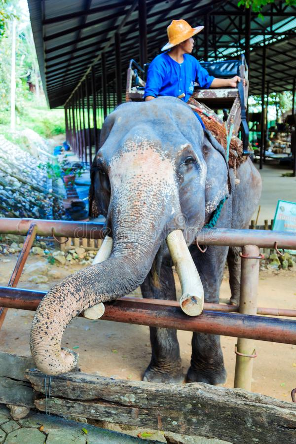 Lampang Tajlandia, Listopad, - 26, 2017: Mahout o i turystyczna przejażdżka obraz royalty free