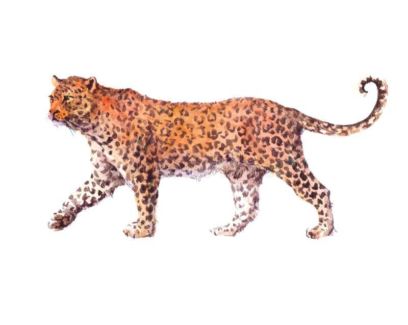 lampart dziki duży kot ilustracja wektor