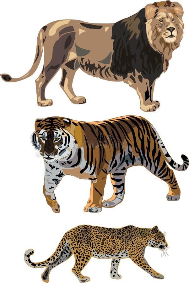 lamparta lwa tygrys royalty ilustracja