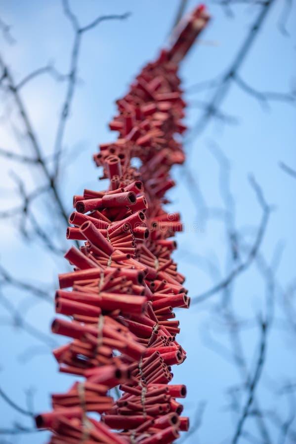 Lampas czerwone petardy wiesza w drzewie obraz royalty free