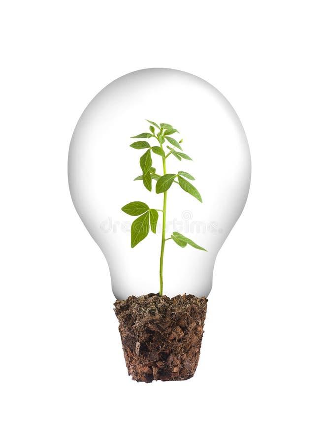 Lampboom stock afbeelding