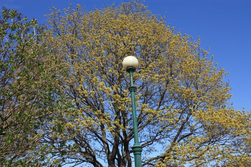 Lampe contre un arbre et un ciel bleu images libres de droits