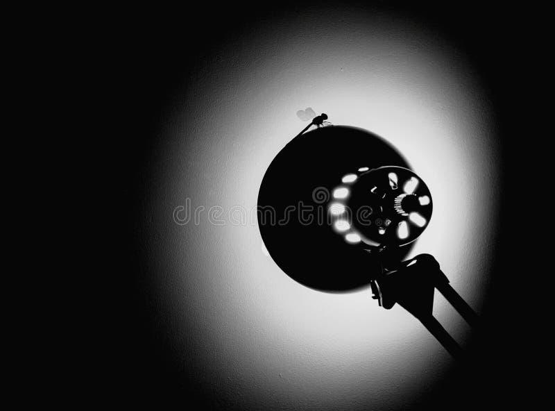 Lampe et libellule photos libres de droits