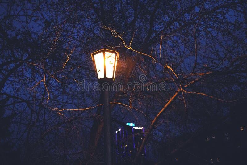 Lampion wśród gałąź obraz royalty free