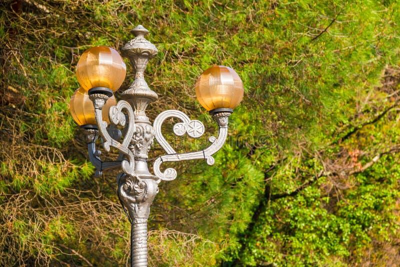 Lampione sui precedenti degli alberi nell'arboreto di Soci, Russi fotografia stock libera da diritti