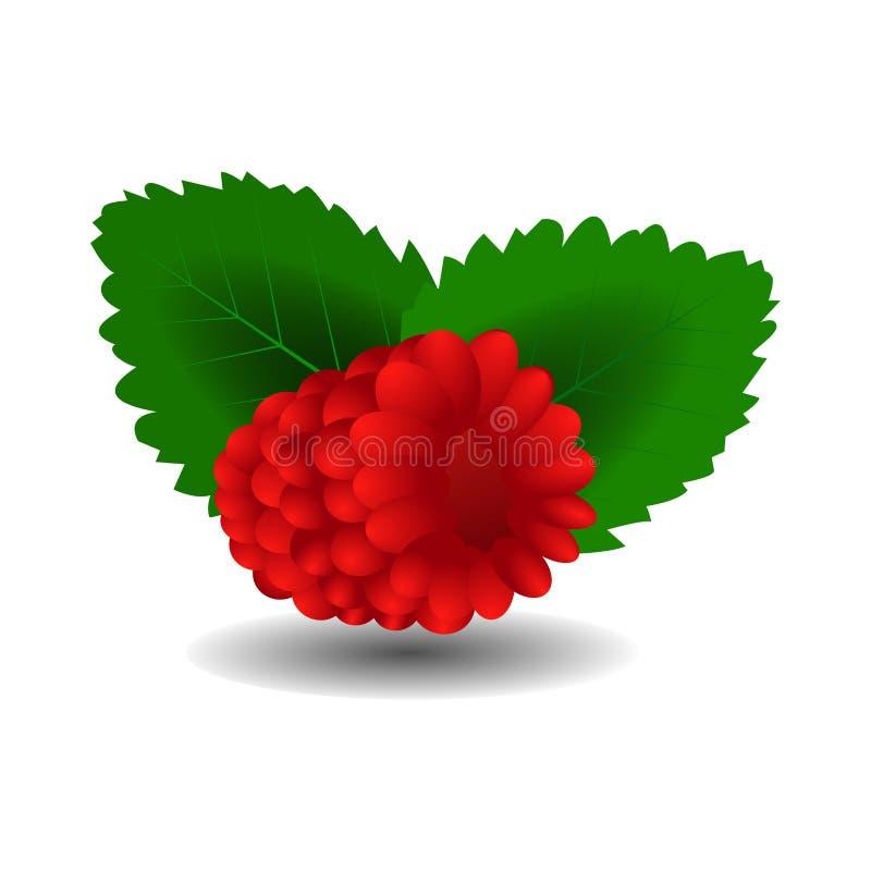 Lampone Frutta dolce icone di vettore 3d messe Illustrazione realistica royalty illustrazione gratis