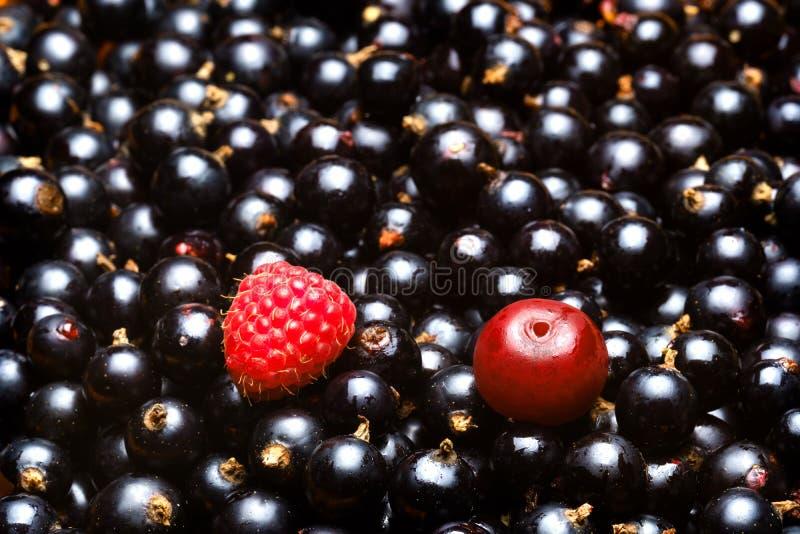 Lamponi e ciliege ed intorno a molta uva passa matura delle bacche con i punti culminanti sulla pelle fotografie stock libere da diritti