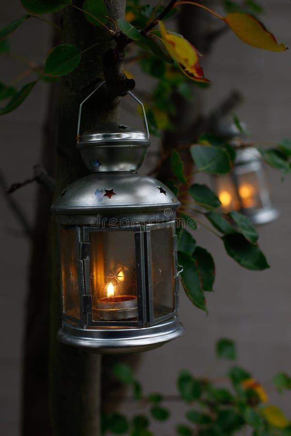 Lampowy obwieszenie w drzewie fotografia stock
