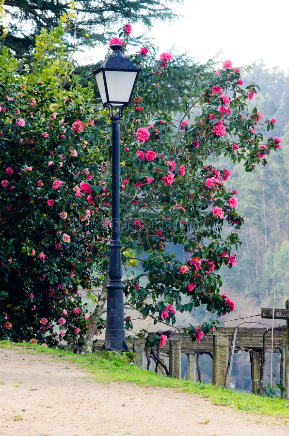 Lamppost and garden stock images