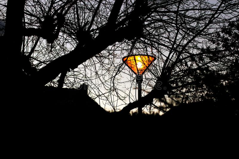 Lamppost glowing in the park with winter branches silhouettes stock photos