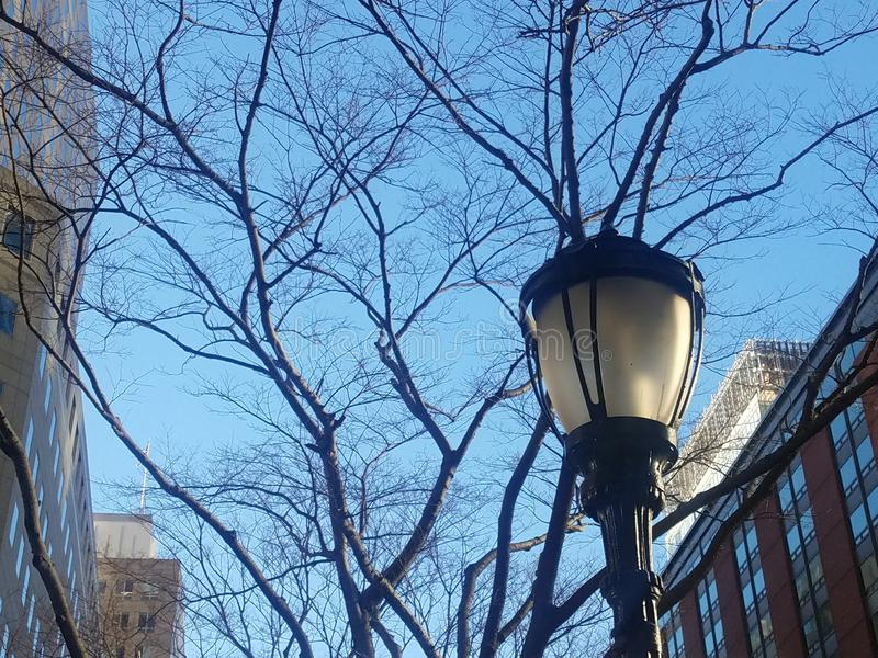 Lamppost with winter trees and sky stock images