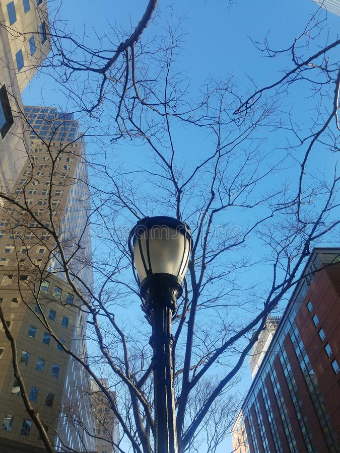Lamppost with winter trees and sky stock image