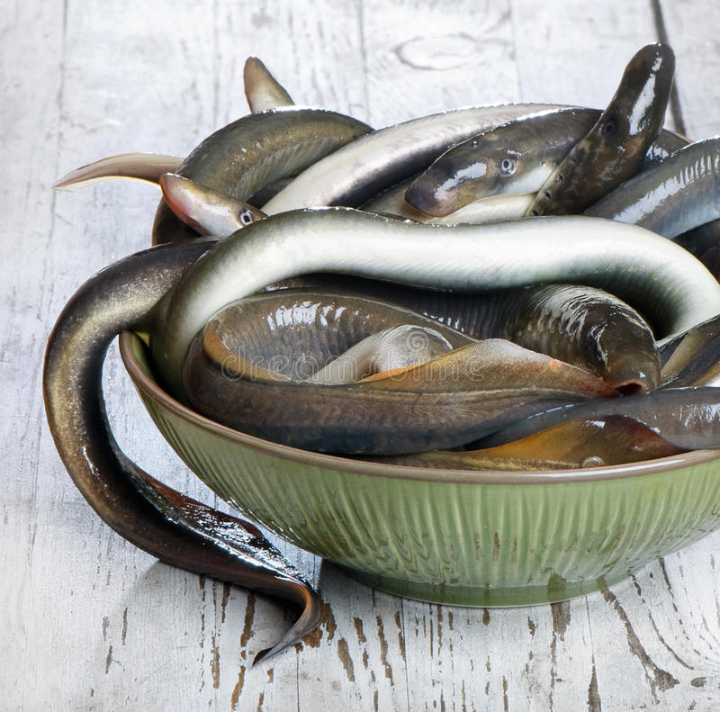 Lamproie de poissons image libre de droits