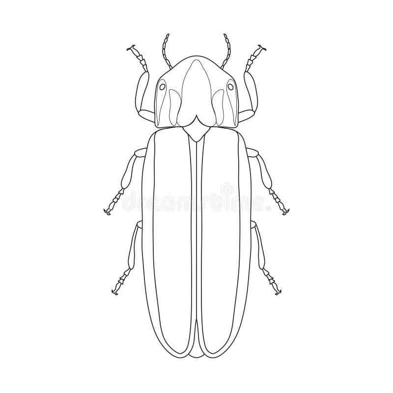 Lampyridae Del Escarabajo De La Luciérnaga Bosquejo De La Luciérnaga ...