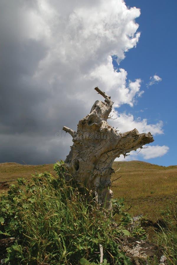 lamslagen tree royaltyfria foton