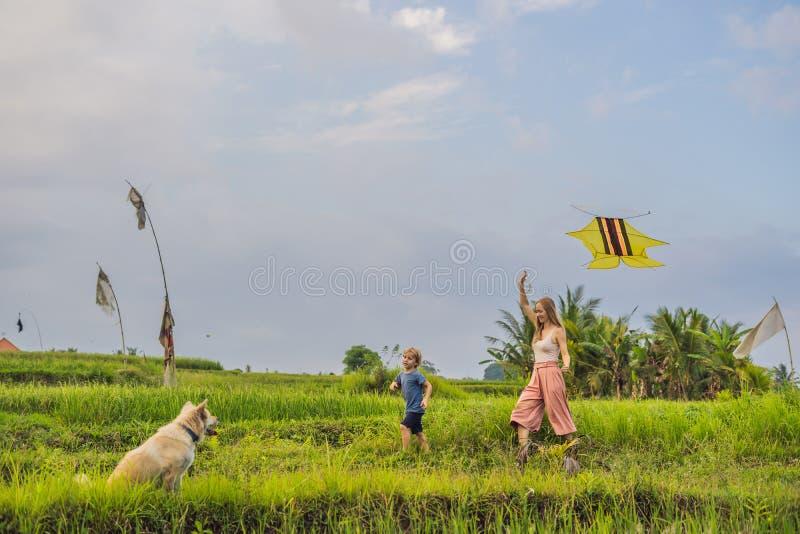 Lançamento da mamã e do filho um papagaio em um campo do arroz em Ubud, ilha de Bali, Indonésia foto de stock royalty free
