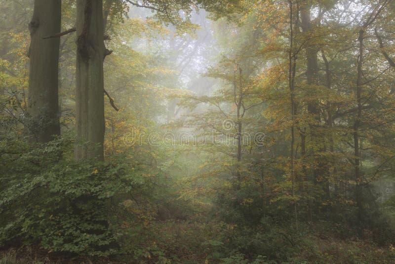 Lan de niebla evocador vibrante colorido imponente del bosque de Autumn Fall imagen de archivo libre de regalías