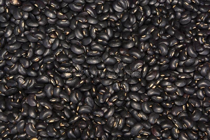 Lana de borra negra de Bean Vigna imagen de archivo