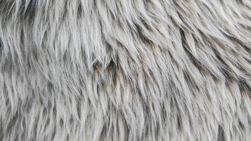 Lana delle pecore immagini stock