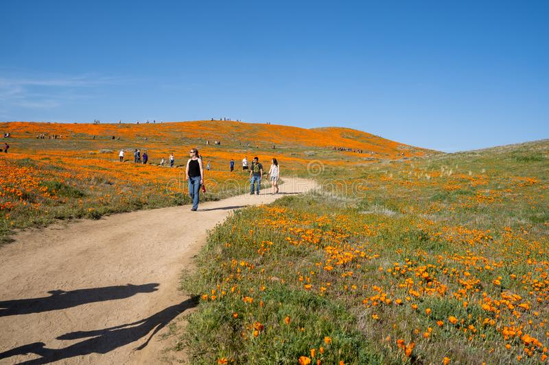 Lancaster, California - March 24, 2019: Crowds of tourists at Antelope Valley Poppy Fields trails as the crowds descend on the stock image