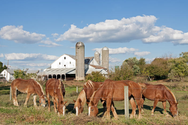 Lancaster County Amish Farm stock photos