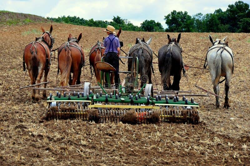 Lancaster County, PA: Молодость Амишей вспахивая поле стоковые изображения rf