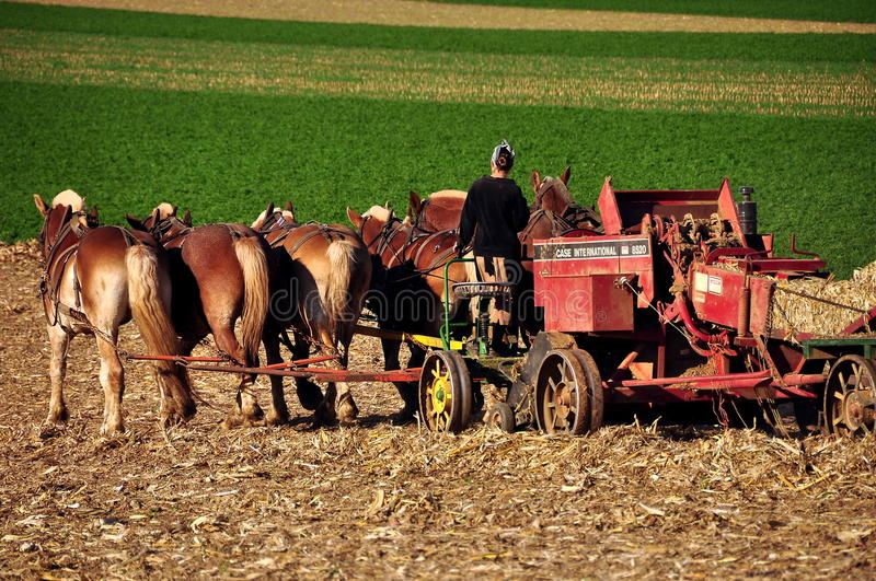 Lancaster County, PA: Amish Woman PLowing with Horses. Lancaster, Pennsylvania: Amish woman driving a team of six horses working in a field on the family farm royalty free stock images