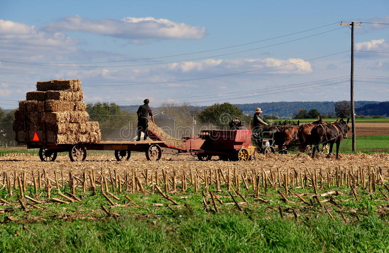 Lancaster County, PA: Amish Working Fields. Lancaster County, Pennsylvania: Amish farmers at work making hay bales as they plow under a corn crop on their farm stock photography