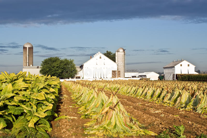 Lancaster-Grafschaft-Tabak-Bauernhof stockfotografie