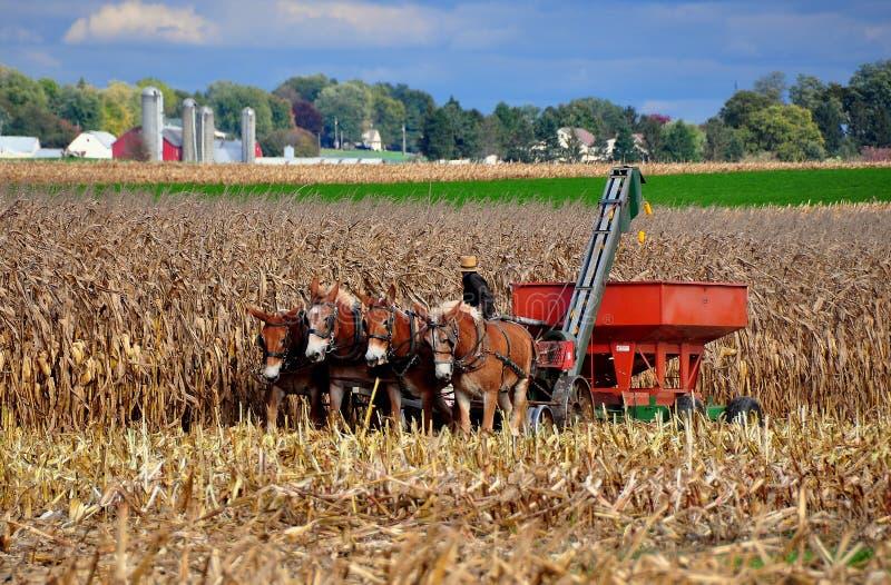 Lancaster okręg administracyjny, PA: Amish rolnik w polu fotografia stock