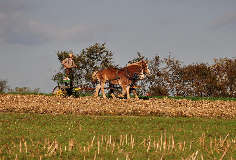 Lancaster okręg administracyjny, PA: Amish rolnik z koniami zdjęcie royalty free