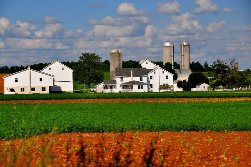 Lancaster okręg administracyjny, PA: Nieskazitelny Amish gospodarstwo rolne obraz stock
