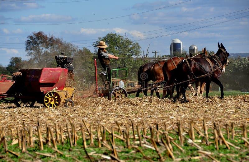 Lancaster, PA: Agricoltore di Amish con gli asini fotografia stock libera da diritti