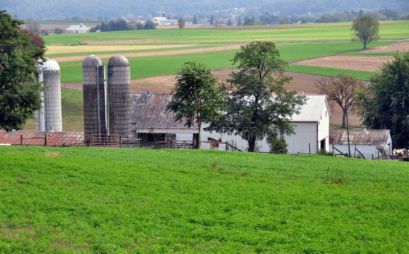 Lancaster, PA: Amish gospodarstwo rolne zdjęcia royalty free