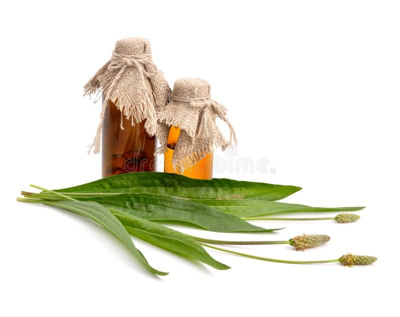 Lanceolata de Plantago avec les bouteilles pharmaceutiques photos libres de droits