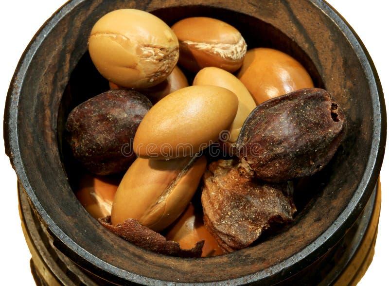 Lanci con i semi dell'argania spinosa per la produzione dei cosmetici di bellezza sopra fotografia stock