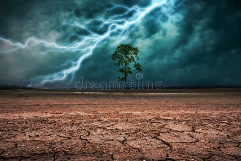 Land aan de grond droge gebarsten en grote boom royalty-vrije stock foto's