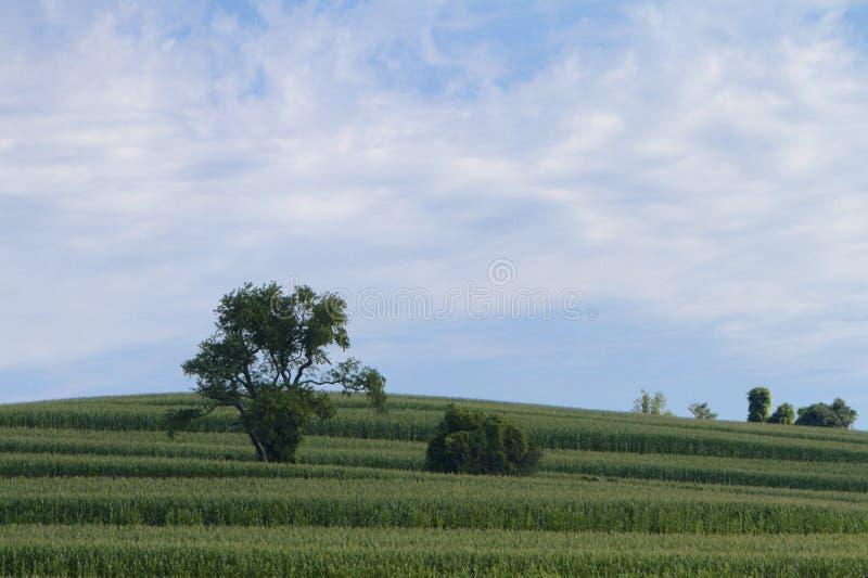 Land-Abhang stockbild