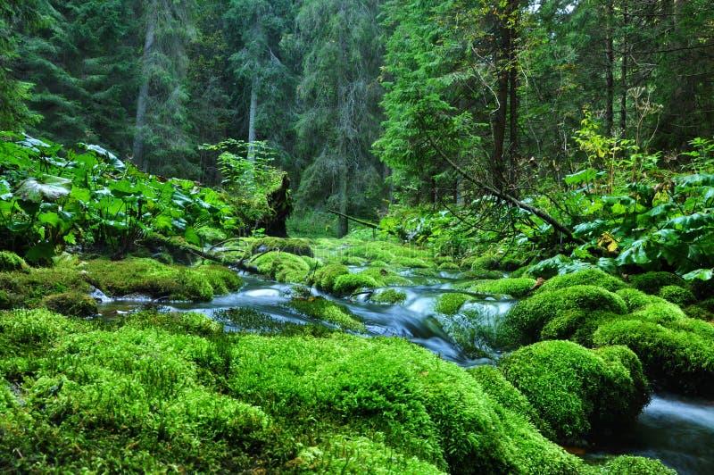 Land av greenen royaltyfri foto