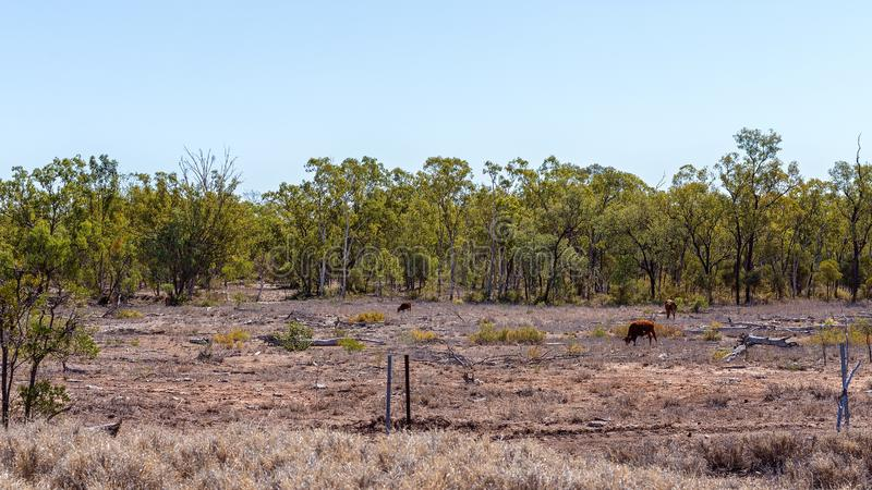 Land Deforestation For Cattle Grazing royalty free stock photography