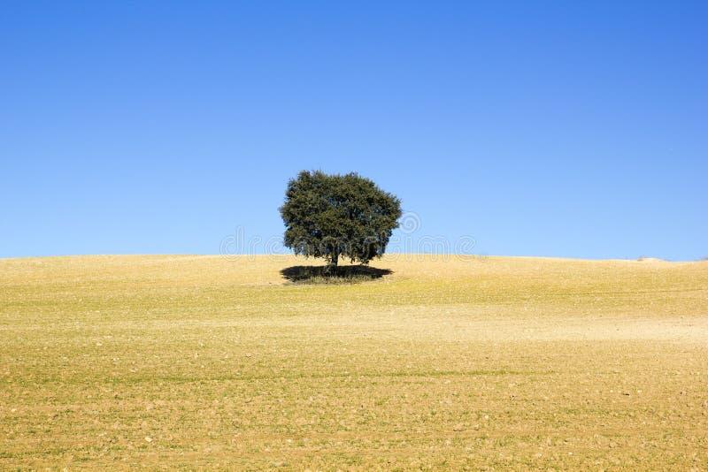 Land des Getreides mit einem Baum stockfoto