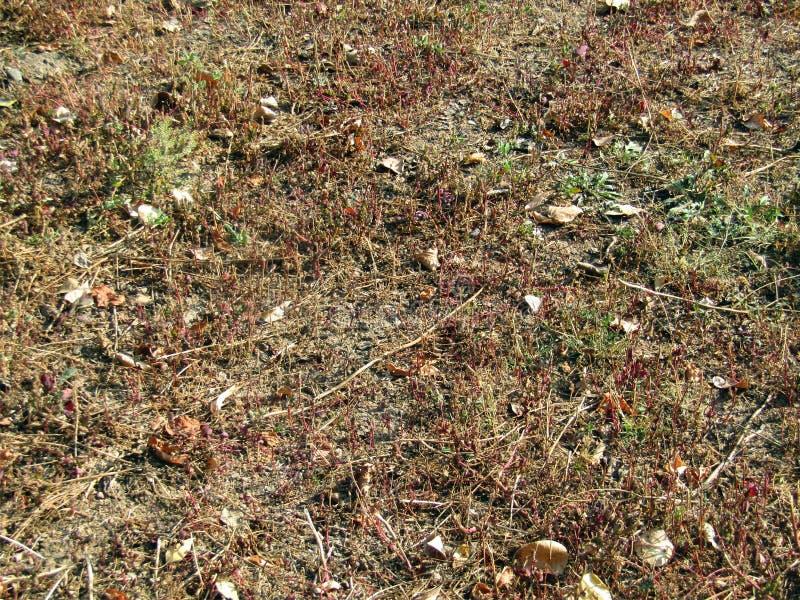 Land en klein gras royalty-vrije stock afbeeldingen