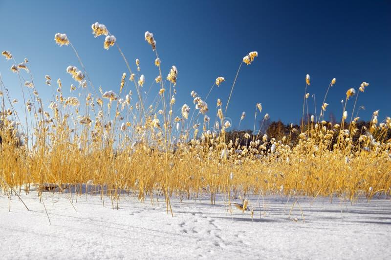 Land kleur-1 van de winter royalty-vrije stock afbeeldingen