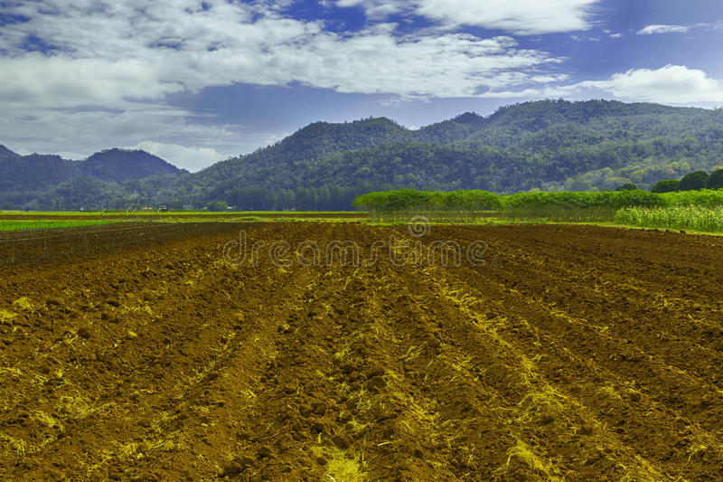 Land preparation for planting. royalty free stock image