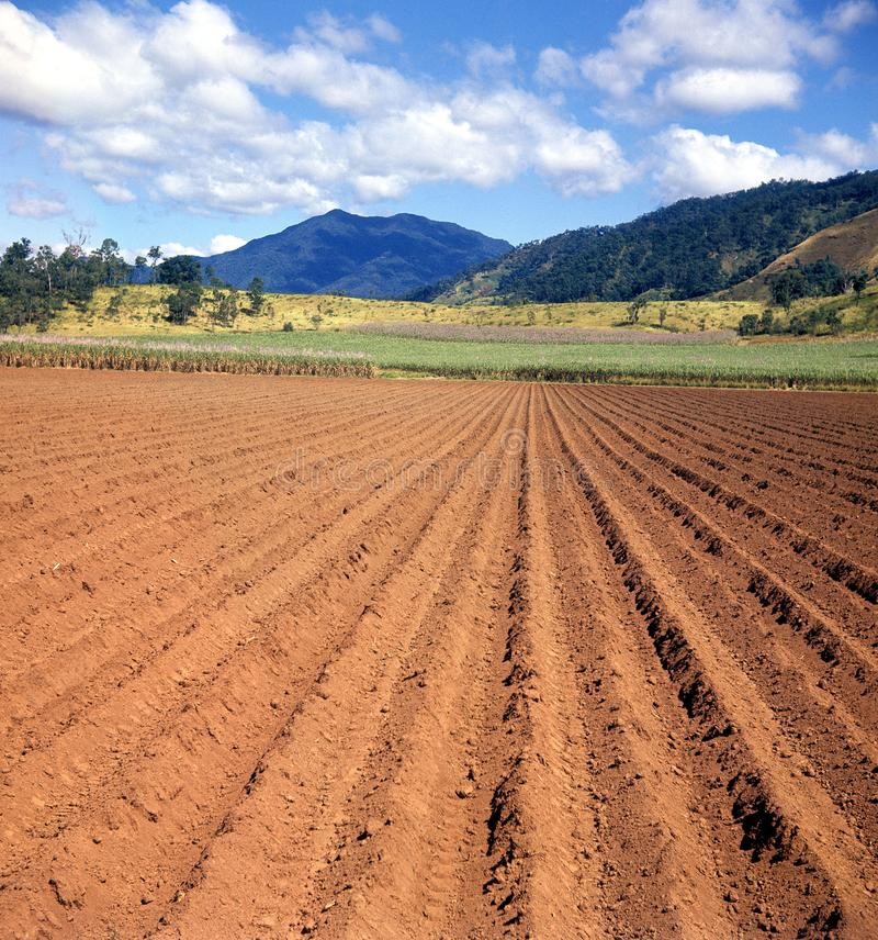 Land ready for cane planting royalty free stock photography